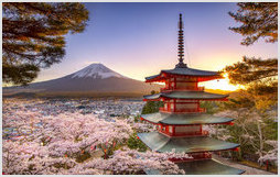 Fuji Mountain and the Shibazakura Garden Festival in Spring, Japan